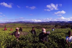 MADAGASCAR-Sahambavy